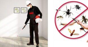 شركة رش حشرات بالقصيم